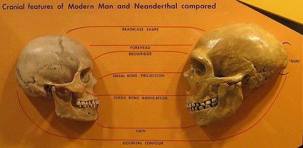 comparing and contrasting neanderthals and modern As our modern human ancestors migrated through eurasia, they encountered the neanderthals and interbred because of this, a small amount of neanderthal dna was introduced into the modern human gene pool.
